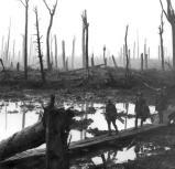 Chateauwald bei Ypern nach Artilleriebombardements (1917)