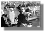 Hundeschau auf der Grünen Woche 1926